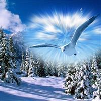 Splendoarea iernii