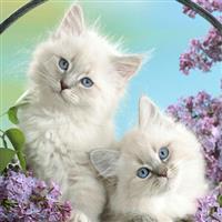 Pisicuțe năzdrăvane