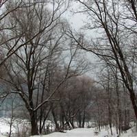 iarna trotusana