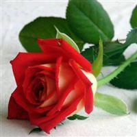 Flori de frorii
