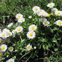 Primăvara în grădina mea