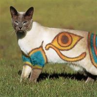 Moda la pisici