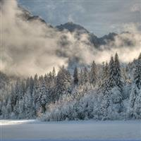 Iarna pe o ramura de brad