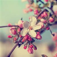 Citate de florii