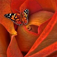 La valse des fleurs. Johann Straus