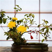 Flori de 1Martie