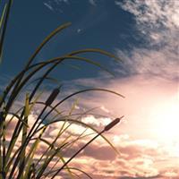 REMIX - Biblia Vechiul Testament Psalmul 104