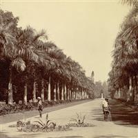 Locuri pe unde am fost-India-Kolkata-Gradina Botanica