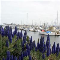 Am fost in U.S.A,  Monterey - Santa Barbara