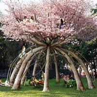 Nebunia Copacilor