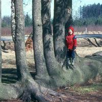Copaci care lupta pentru supravituire