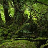Patrimoniul UNESCO-Pădurile seculare și virgine de fag din Carpați și alte regiuni ale Europei