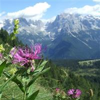 Am indragit muntii. Brenta - Un buchet de flori montane.