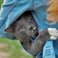 Ce gandesc pisicile?