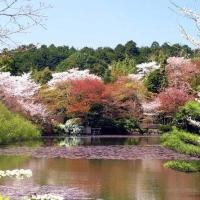 Primavera no Japão