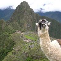 Les Incas Mado