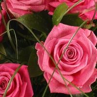 Candoarea trandafirilor