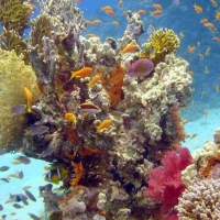Sharm El Sheikh, Egipt
