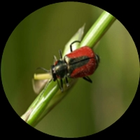 Insects show