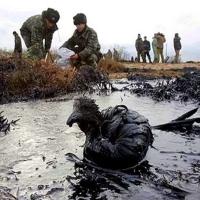 20.04.2010. Dezastru Ecologic, Golful Mexic.