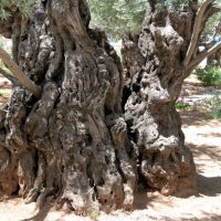 Jerusalem-Mount-of-Olives