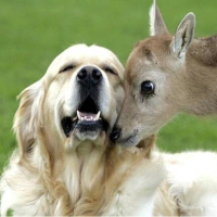 Amicizie improbabili