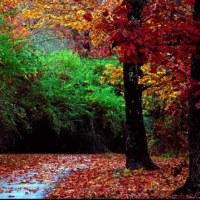 madame l'automne