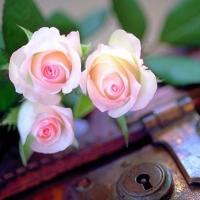 Parfumul florilor (Octavian Paler)
