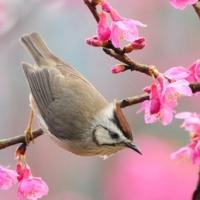 Poem pentru o primăvară perfectă