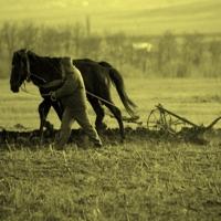 Tipuri de agricultura