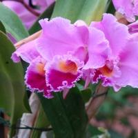Parc floral d`Orleans