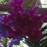 Fleurs D'asie