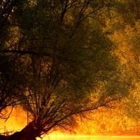 Copacul tău de suflet