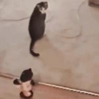 Pisici nebune 2