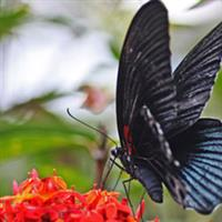 Bali70 butterfly park