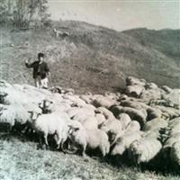 Oieritul montan românesc