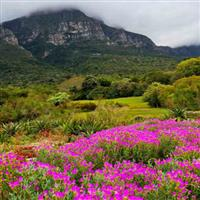 South Africa (parks and gardens) - Tony, Steve