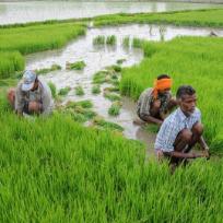 Indian farmer-Agricultorul indian